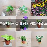 리본꽃다육- 실내 공기정화식물 모음|