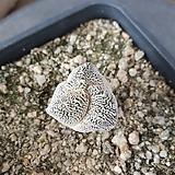 온즈카 삼봉 실생|Astrophytum myriostigma cv. ONZUKA