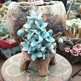 란 수제화분 세일 (LAN) 꽃코사지  No.0065 [premium handmade] - 다육화분 Handmade Flower pot