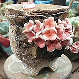 란 수제화분 세일 (LAN) 꽃코사지  No.0069 [premium handmade] - 다육화분 Handmade Flower pot