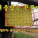 [양면끈끈이]왕흰나방끈끈이 5장-해충(벌레) 퇴치 하우스끈끈이/온실/살충/친환경/나방제거 