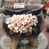 란 수제화분 세일 (LAN) 꽃코사지 No.0028 [premium handmade] - 다육화분 Handmade Flower pot