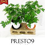 프레스토나인 모기퇴치 공기정화 식물 1+1 구문초 M_ 특가할인|