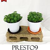 프레스토나인 허브 공기정화식물 1+1 장미허브 M_특가할인|Hub
