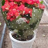 꽃베고니아/물통/랜덤
