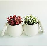 화이트스타 화분SET 실내 공기정화식물|