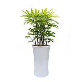 서황금 축하화분 인테리어식물 실내화초 관엽 거실화분|