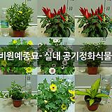 꽃다비원예종묘- 실내 공기정화식물 모음|