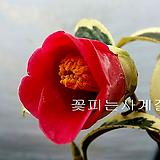 월의취설(꽃대수형) 