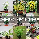 작은식물원- 실내 공기정화식물 모음|