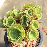 샐러드볼철화 430916|Salad bowls