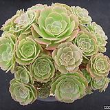 원종샐러드볼 0917|Salad bowls