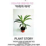 할리퀸아이비 소품 공기정화식물 10202915