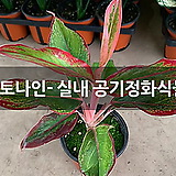 프레스토나인- 실내 공기정화식물 모음|
