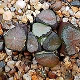 하나초(얼큰이) 13-91