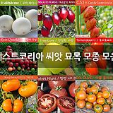 이스트코리아 씨앗 묘목 모종 모음