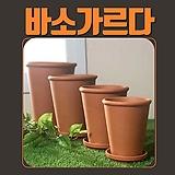 연핑크아스타 공작초 야생화 노지월동