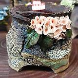 란 수제화분 세일 (LAN) 도장없어요 꽃코사지 No.19 [premium handmade] - 다육화분 Handmade Flower pot