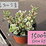아악무소품 1500원 한정판매 (단일품목 구매시 5천원 이상 배송가능)