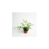 푸티리스 이산화탄소제거 식물|
