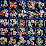 믹스리톱스씨앗(100립)-280여종이 섞여 있어요/리톱스씨앗|Lithops