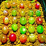 리톱스 믹스 씨앗(100립)-280여종이 섞여 있어요/리톱스씨앗