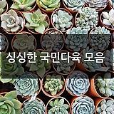 국민다육식물 선인장 100종류|