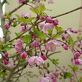 수사해당2-환상적인 꽃