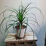 독구리난 구근식물 119|