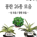 난 모음1/난/풍란/동양란/서양란/대엽란/식물/꽃/석곡/난/농장/식물/나라아트|