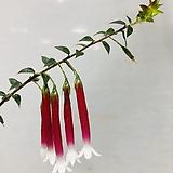 에파크리스(꽃이피기시작했어요~동일품배송 )|