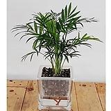 테이블야자세트/식물/공기정화식물/가습기/천연가습기/공기정화/나라아트|