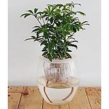 미니홍콩세트/식물/공기정화식물/가습기/천연가습기/나라아트|