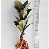 멜라니/가습기/천연가습기/공기정화식물/천연가습기/나라아트|