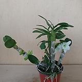 포켓러브 꽃대 