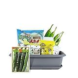 월드가드닝 길러먹는유기농채소-고추텃밭세트9종/배양토/마사토/씨앗/식물이름표/식물애보약|