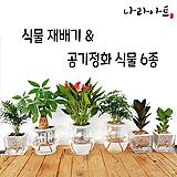 [런칭기념할인]공기정화식물6종세트/자재/가습기/천연가습기/식물재배기/재배/나라아트|