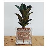 멜라니세트/공기정화식물/천연가습기/가습기/나라아트|