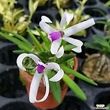 꽃이 예쁜~바이칼라|