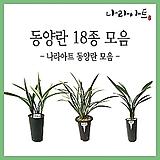 동양란모음/난/동양란/서양란/난모음/식물/꽃/나라아트
