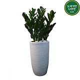 금전수 개업화분배달 인테리어식물 DLP-373|