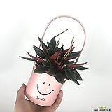 에덴로소스마일바구니세트 핑크 공기정화식물 에덴로소|