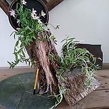 #고목나무에 꽃이 피다2(목부작,set)-로디게시(난,란)|