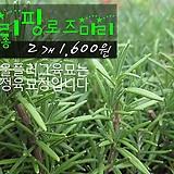 클리핑로즈마리(크리핑creeping rosemary) 허브모종 2개(1600원) 서울육묘생산 정품모종(단일품목 구매시 5천원 이상 배송가능)|