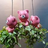 곰돌이 멜론디시디아걸이 (귀요미에요) 새로입고  (미세먼지제거)|
