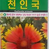 자소씨앗(1000립)