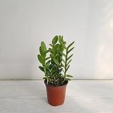 예삐/공기정화식물/반려식물/온누리 꽃농원|