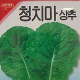 청치마씨앗(3000립)|