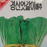 엇갈이배추씨앗(3000립)|