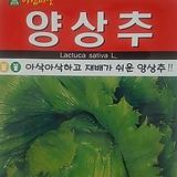 양상추씨앗(1000립)|